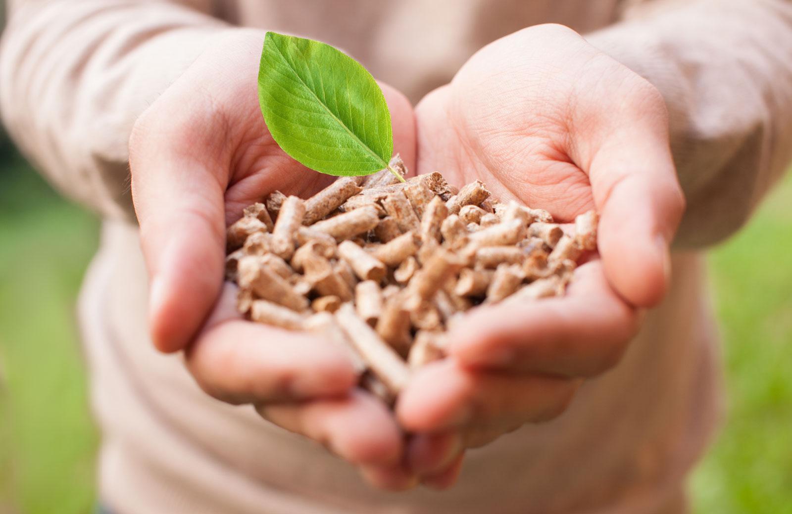 énergie biomasse